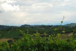 Barolo, Barbaresco, Barbera d'Alba, Barbera d'Asti, Ruëro, zovele heerlijke wijnen
