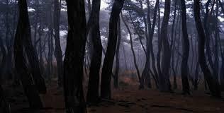 bae pinetreeseries