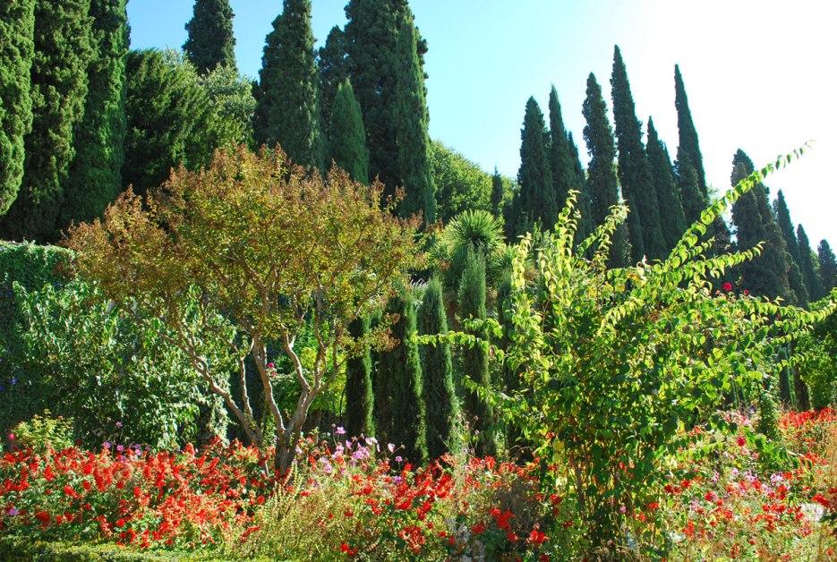 een weelde aan planten en bloemen