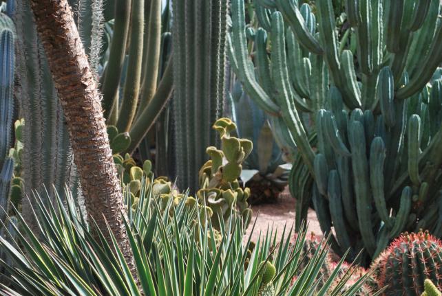 cactussenwoud