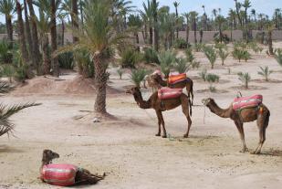 de Palmerai, in de zandwoestijn rond de stad