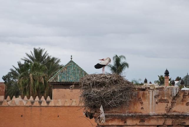 marrakech160