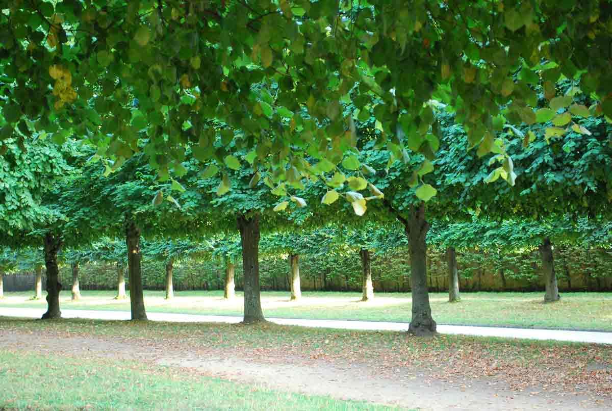 Versailles jardins arbres138 wannderful for Exposition jardin versailles 2015