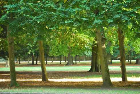 Versailles_jardins_arbres146
