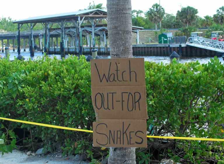 Florida Everglade City