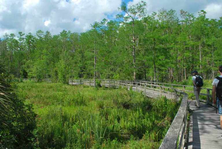 Florida Corkscrew Swamp Sanctuary