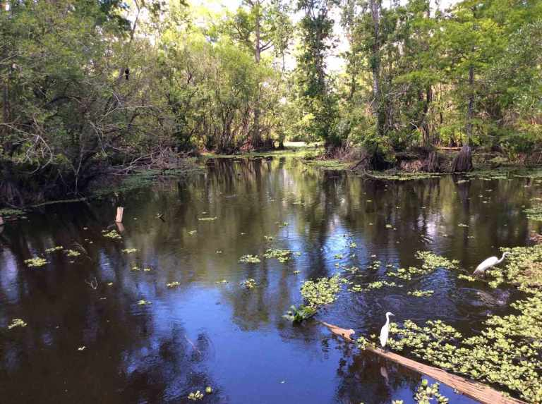 Florida Corkscrew Swamp